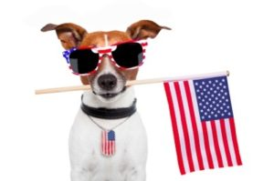 Dog-Fourth-of-July